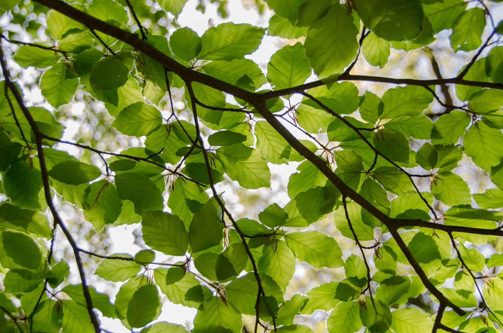 Kletterausrüstung Baumpflege : Startseite baumpfleger